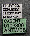 Pseudomyrmex pallidus casent0103890 label 1.jpg