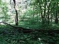 Psilskyi Landscape Reserve (05.05.19) 01.jpg