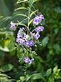 Purple Flowers (66446449).jpeg
