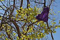 Purple Underwear in Tree.jpg