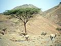 Qesm Marsa Alam, Red Sea Governorate, Egypt - panoramio - youssef alam (13).jpg