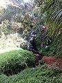Queen's Bath Kauai - panoramio (6).jpg