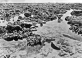 Queensland State Archives 1028 Exposed Coral Great Barrier Reef 1931.png