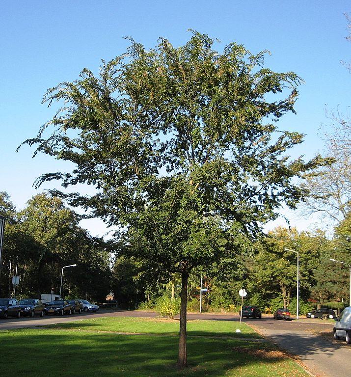 Planting Under Elm Trees : Original file ? pixels size kb mime type