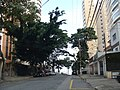 RUA GUAIRÁ - VISTA LADO SUL - panoramio.jpg