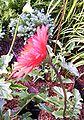 Red-flower-strands2.jpg
