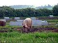 Redhill Farm - geograph.org.uk - 171675.jpg