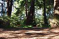 Redwood Memorial Grove 24 2017-06-12.jpg