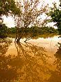 Reflexo da Natureza - Teles Pires River.JPG
