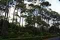 Reserva Florestal dos Mistérios de São João, concelho das Lajes do Pico, ilha do Pico, Açores, Portugal.JPG