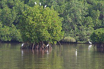 Resting Egrets.jpg