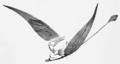 Rhamphorhynchus wing preservation diagram.png