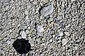 Rhyolitic pumice (Bishop Tuff, Pleistocene, 760 ka; Sherwin Summit, Owens Valley, California, USA) 4.jpg