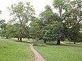 Richmond Park - geograph.org.uk - 1922064.jpg