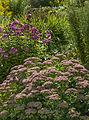 Ringve botaniske hage foto-åge hojem NTNU Vitenskapsmuseet DSC3106 (15264124136).jpg