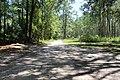 River Creek WMA main road north back to entrance.jpg