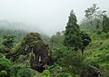 Rock Garden, Darjeeling at mist.JPG