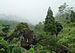 Rock Garden, Darjeeling at mist.JPG