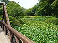 Rokko alpine botanical garden10.jpg