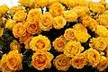 Rose 'Rotary Sunrise'.jpg