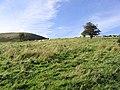 Rough grazing field - geograph.org.uk - 563310.jpg