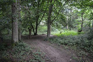 Roughtalleys Wood