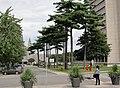 Rue des Sciences de l'éducation, Université Laval.jpg