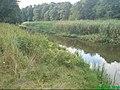 Rzeka Wełna w okolicach Rogoźna - panoramio.jpg