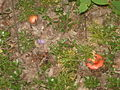 SK-Mushroom.JPG
