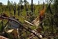 SR Storm Damage (5629620002).jpg