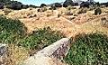 Salida de Robledo (ruta Daganzo-Narros) - panoramio.jpg