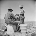 Salinas Valley, Monterey County, California. Piece-time work in peas. A young Oklahoma girl has her hamper looked... - NARA - 532156.tif