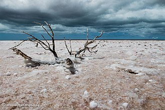 "Francois Peron National Park - A salt encrusted branch on a super saline ""birrida"" in Francois Peron National Park"