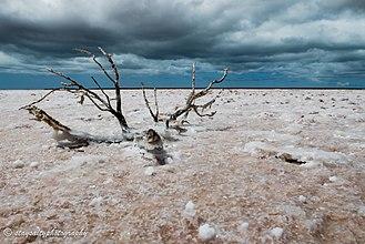 "Francois Peron National Park - A salt encrusted branch on a super saline ""birrida"" in Francois Peron National Park"