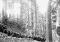 Schiessen aus dem Schützengraben - CH-BAR - 3240427.tif