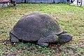 Schildkröte (Bernhard Bührer) jm88159.jpg