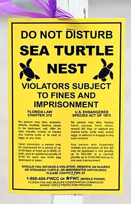 Sea turtle nest sign (Boca raton, FL)