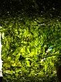 SeaweedSquare.jpg
