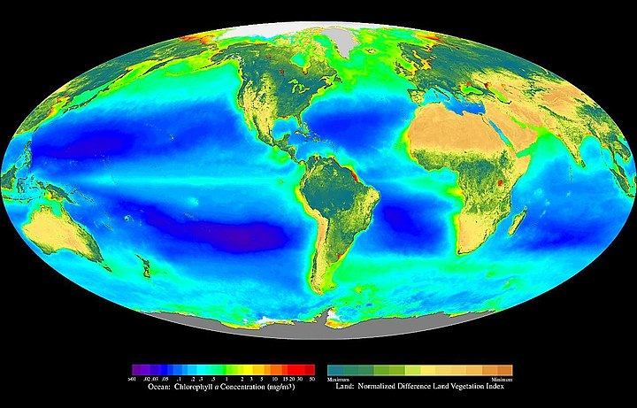 A false-color composite of global oceanic and terrestrial photoautotroph abundance, from September 2001 to August 2017. Provided by the SeaWiFS Project, NASA/Goddard Space Flight Center and ORBIMAGE. Seawifs global biosphere.jpg