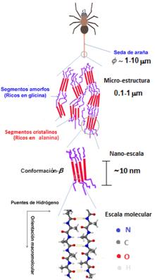 Struttura chimica della ragnatela
