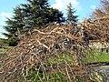 Seefeldquai 2012-03-20 16-44-36 (P7000).JPG