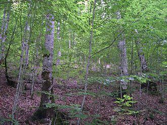 Irati Forest - Image: Selva Irati 06
