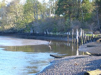 Boundary Bay - A heron wading in Boundary Bay near the mouth of the Campbell River (just south of White Rock)