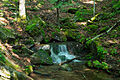 Seneca-creek-judy-springs-wv - West Virginia - ForestWander.jpg