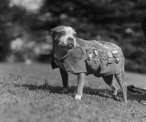 Sergeant Stubby - Sergeant Stubby
