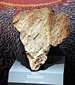 Shattercone meteorite impact structure - Smithsonian Museum of Natural History - 2012-05-17.jpg