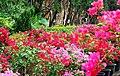Shilin Residence Park 士林官邸公園 - panoramio (1).jpg