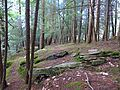 Shohola Box Canyon - panoramio (2).jpg