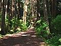 Sitka NHP trail.jpg