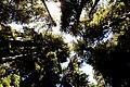 Skyward (293688007).jpg